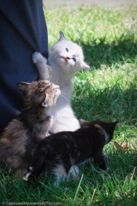 Kittens on the Loose